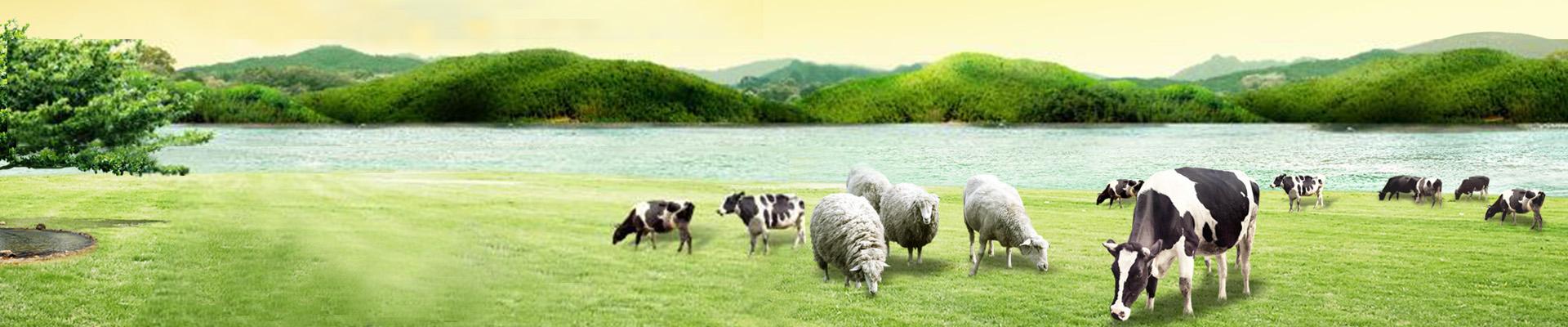 牛羊屠宰设备